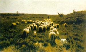 schapen mauve