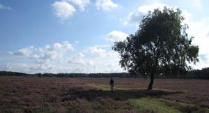 Westerheide Hilversum